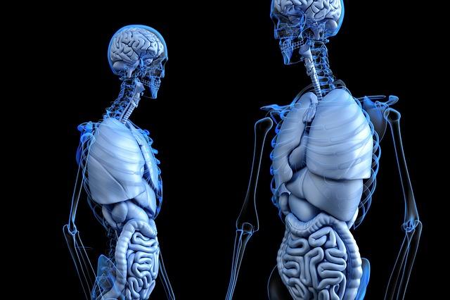 kostry, vnitřnosti